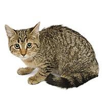 Adopt A Pet :: Shawnee - Adrian, MI