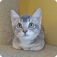 Adopt A Pet :: Annie Oakley - St Paul, MN