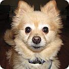 Adopt A Pet :: Bubby **NO KIDS**
