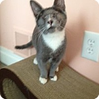 Adopt A Pet :: Milky Way - East Hanover, NJ