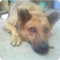 Adopt A Pet :: Rocky - Fresno, CA