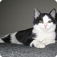 Adopt A Pet :: Topanga - Irvine, CA
