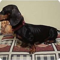 Adopt A Pet :: Tadpole - San Jose, CA
