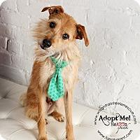 Adopt A Pet :: Oliver - Omaha, NE