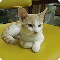 Adopt A Pet :: Panda - Medina, OH