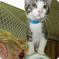 Adopt A Pet :: Turtle - Medina, OH