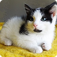 Adopt A Pet :: Alfie - N. Billerica, MA