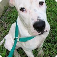 Adopt A Pet :: Radar - Miami, FL