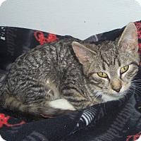 Adopt A Pet :: CHARLIE - Medford, WI
