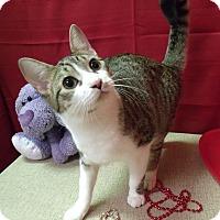 Adopt A Pet :: Barney - Modesto, CA