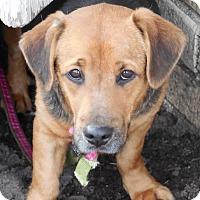 Adopt A Pet :: Shirley - Howell, MI