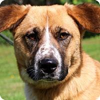 Adopt A Pet :: Maddie - Glastonbury, CT