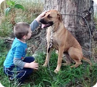 Boxer Mix Dog for adoption in Dale, Indiana - Kiara