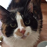 Adopt A Pet :: AF-Kit - Devon, PA