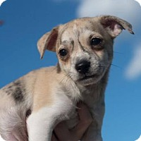 Adopt A Pet :: Eragon - Monroe, GA