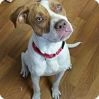 Adopt A Pet :: Weston - Lisbon, OH