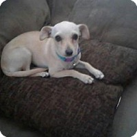 Adopt A Pet :: Freya - Phoenix, AZ