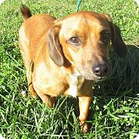 Adopt A Pet :: Cubby - Reeds Spring, MO