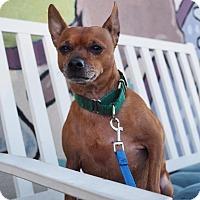 Adopt A Pet :: Dakota - Whitehall, PA