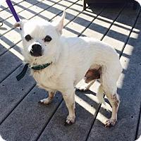 Adopt A Pet :: Spudz - Dayton, OH