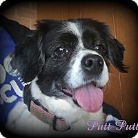 Adopt A Pet :: Putt Putt - Denver, NC