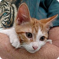 Adopt A Pet :: Unique - Warren, OH