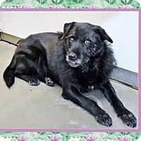 Adopt A Pet :: Evie - San Jacinto, CA