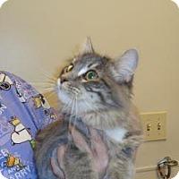 Adopt A Pet :: Dutchess - Wildomar, CA