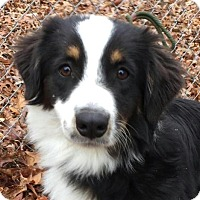 Adopt A Pet :: Sally - Spring Valley, NY