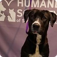 Adopt A Pet :: DILBERT - Tucson, AZ