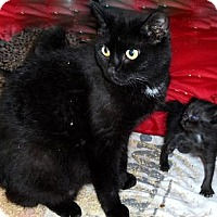 Adopt A Pet :: Jessica - Xenia, OH