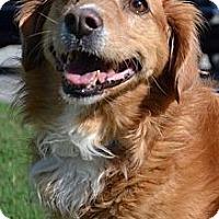 Adopt A Pet :: Lexi - Brattleboro, VT