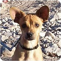 Adopt A Pet :: Joey - Las Vegas, NV