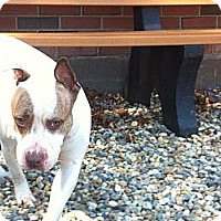 Adopt A Pet :: Molly - South Windsor, CT