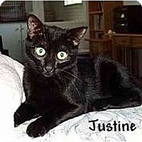 Adopt A Pet :: Justine - AUSTIN, TX