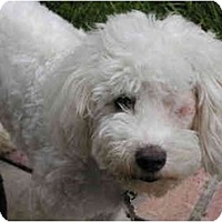 Adopt A Pet :: Jiggs - La Costa, CA