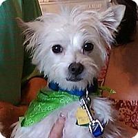 Adopt A Pet :: McKee - Carrollton, TX
