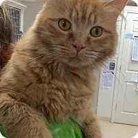 Adopt A Pet :: Alice - Webster, MA