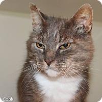 Adopt A Pet :: Toast - Ann Arbor, MI