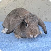 Adopt A Pet :: Candy - Bonita, CA