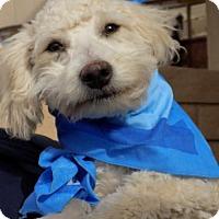 Adopt A Pet :: Frank - Apple Valley, CA