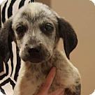 Adopt A Pet :: AARON