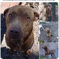 Adopt A Pet :: Patrick - St Petersburg, FL