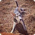 Adopt A Pet :: Autumn 4222