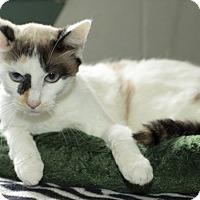 Adopt A Pet :: Lola - Dallas, TX