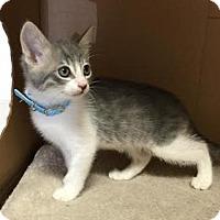Adopt A Pet :: Patty - Pleasant Hill, CA