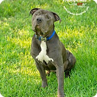 Adopt A Pet :: Dempsey - Pearland, TX