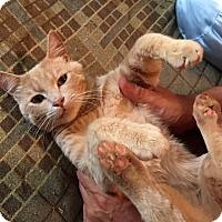 Adopt A Pet :: Garrett - Fairfax, VA