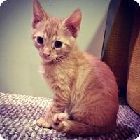Adopt A Pet :: Ronnie - Colmar, PA
