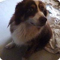 Adopt A Pet :: Sam - Avon, NY